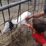 Interação com cabras