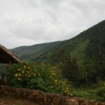 Bwindi Forest from Ndego