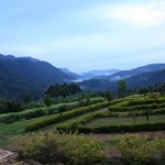 Kabale Terraced Hills near Ndego Gate