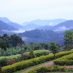 Bwindi Forest from Silverback Lodge V