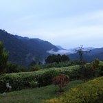 Bwindi From Silverback Lodge