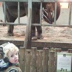 Elephant enclosure