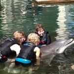 Dolphin Encounter birthday party