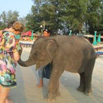 Baby elephant brought every evening to the beach