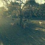 Corral con gallinas