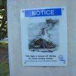 осторожно черепахи