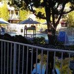 Poolside landscaping