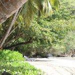 Sitting under the palms in a longe chair- ocean side.