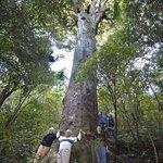 Our beautiful 2000 year old Maitai Tree