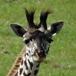 Foto di Wild Africa Trek