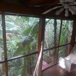 Un hôtel en harmonie avec la jungle