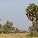 Rice field around Ganesha