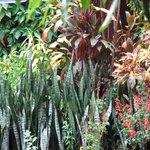 plantas!!1