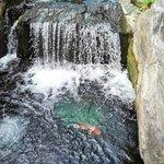 водопадик с рыбками