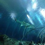 Tubarão e peixes, visão do túnel