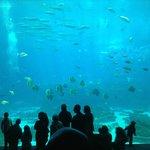 Visão magnífica do aquário!