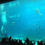 Visão do aquário