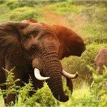 Elephant at Thanda