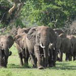 The herd elephants that were behind our room. We followed them after we met up with our guide Jo