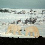 Imax, filme sobre ursos polares. Lindo!