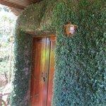 Doors of the tree house