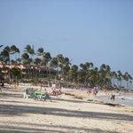 Beach n palms
