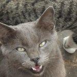 Schöne Katze .