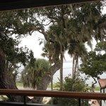 live oaks outside