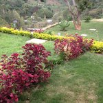 Flower Garden at the lodge