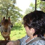 La girafe Helen!