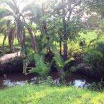 un oasis en medio de la sabana