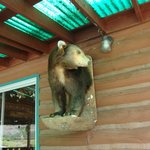 Bear mount on wall on deck of restaurant/lodge