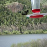 Humming birds entertain you on the deck of the restaurant