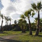 Exterior paseo palmeras