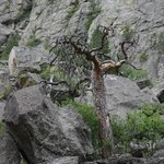 Rockfall and tree at the base
