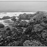 Bodega Bay I