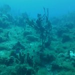 beautiful underwater landscape