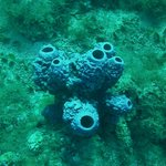 cool coral