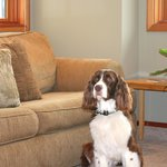 Living Room - The Conservatory - Pet Friendly