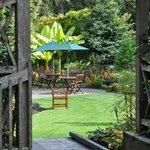 PowellsWood, A Northwest Garden