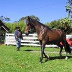 gait horse