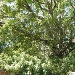 Nice shady trees around