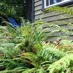 Cedar Loft Suite