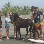 foal on the otherwise desserted beach...beautiful!