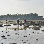 Low-Tide Beach Discovery Walk - take good shoes