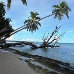 Waving palms of Marau Sound