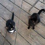 Stray Kitties at Breakfast
