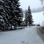 Зимний лес рядом с отелем
