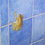 Grenouille dans la salle de bain