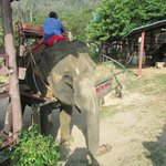 Elephant preparing for riders to embark